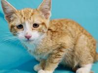 Fidel's story I'm a playful kitten looking for the