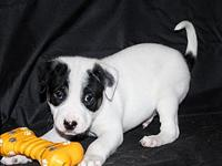 Fido's story MEET FIDO! Fido is 6 weeks old and ready