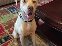Fields is an adorable male lab-mix that is