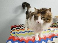 Fifi's story Fifi is a gorgeous girl who enjoys being