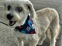 Fifi's story Fifi is a special needs sweet 7 year old