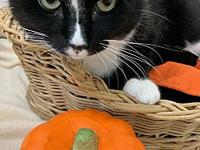 Figaro's story Figaro is a laid back guy. He loves to