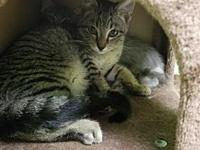 Figgy's story Hi, I'm Figgy and I love to purr. I'm