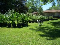We have a large selection of farm grown plants for