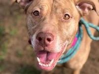 "Filia's story ""Happiness is a pit bull smile."" Pit bull"
