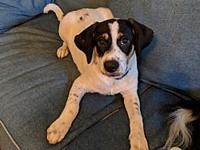 Filmore-ADOPTION PENDING's story This pudgy pup is
