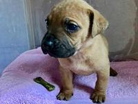 Finch's story Finch is a female black mouth cur/German