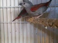 I have couple birds for sale what you see in the