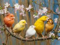 International Canary & Finch Society 18th Annual Show