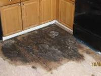 If you have a mold problem, call our Mold Hotline at