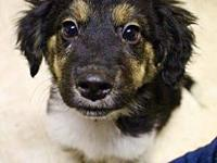 Finn's story Finn is a 17-week-old Collie mix puppy who