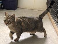 Finnigan - tabby in 20 Call 's story This fellow in