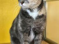 My story Hi, my name is Fiona! I'm a very sweet girl,