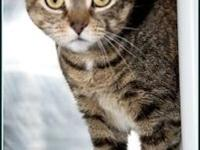FIONA's story $97.50 FEE INCLUDES: neutering/spaying,