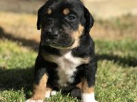 Fiona is one of 7 puppies! She is a GORGEOUS mix of