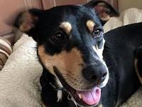 FIONA's story AVAILABLE FOR ADOPTION! Fiona is a