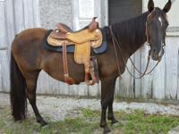 Fiona is an 2007 year old 14.3hh Tennessee Walker. She