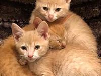 Fire Kittens (Chief, Flame, Louie and Flash)'s story