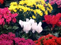 Type:GardenType:FlowersThermaLeaf by Commercial Silk
