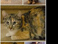 Fireball's story Fireball is an excellent mouser, she