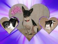 Molly came to us with her companion Vinnie. They came
