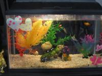We have a 5.5 gallon fish tank and tropical fish for