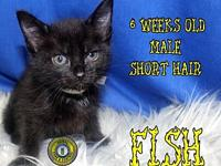 Fish's story You can fill out an adoption application
