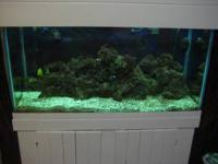 Salt water fish tank 90 g .$yeares old excelleat