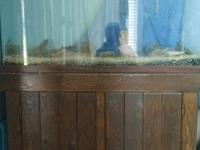 We are selling a well-used fish tank on a sturdy wooden