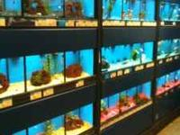 included steel black stands, aquariums that divide into