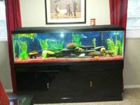 100 or 110g fish aquarium up and running.Cullman city
