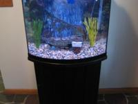 Fish Tank for Sale with Bow-Front Aquarium View. It