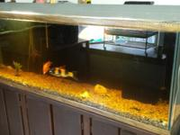 Three tanks for sale. First is a 130 gallon tank and