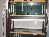 Fish tank- 150 gallon total fish system  This breading