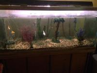 100 gallon fish tank and stand for sale. Will come with