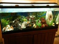 55 Gallon Fish Tank likewise comes with:. Marineland