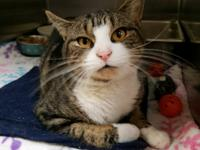 Fisher was brought into the shelter as a stray that was