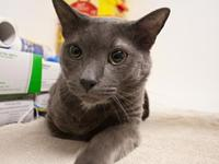 Fisher's story My name is Fisher and I am a sweet boy,