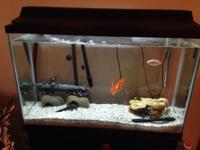 60 gallon rectangle-shaped Fishtank, shelving