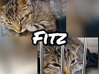 Fitz's story I'm Fitz. I was brought to FFAA by a nice