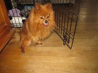 Fizzgig's story He has two teeth. a heart murmur and