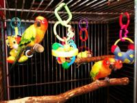 My husband and I are needing to rehome our sun conure.