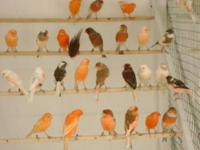 Fleamarket Pet Store/ Bird Store for sale- due to