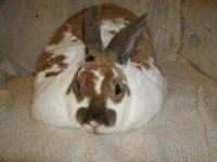 I have lots of bunnies for sale. Lots of different