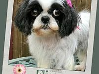 FLIRTY's story *FLIRTY MUST BE ADOPTED WITH HER PUP,