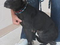 Flo's story Flo is a 2-3 year old Lab/AST X female. She