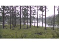 Highlights:. Natural longleaf pine environment with