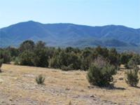 END OF THE ROAD 35 ACRES with tall trees including