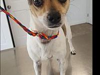 Florence's story Florence is a female terrier/jack