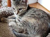 FlossieMae18's story All Purr Partners Adoptable